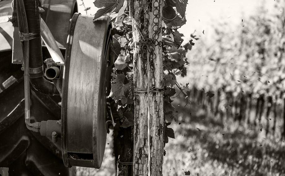 Masut da Rive: buon vino e difesa dell'ambiente